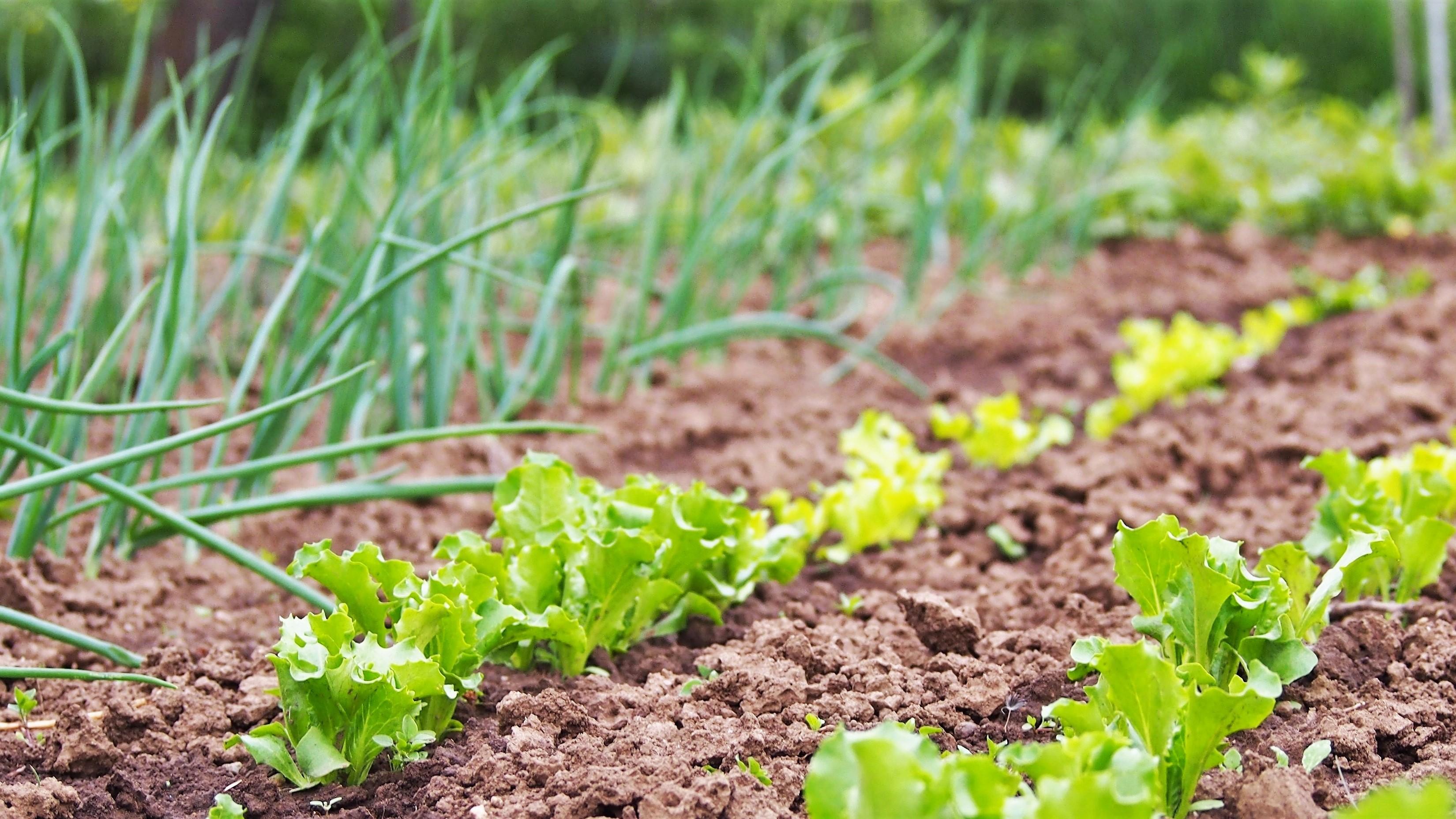 urban_inno_tuke_agriculture_16_9 (1)